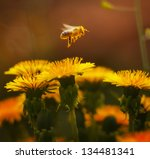Tiny Bee Flies Above The...