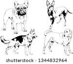 vector drawings sketches...   Shutterstock .eps vector #1344832964
