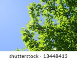 nature background | Shutterstock . vector #13448413