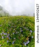 fogy field of blue flover on a... | Shutterstock . vector #1344932627