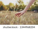 female hand nature wheat trees... | Shutterstock . vector #1344968204