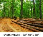 deforestation  felled logs and... | Shutterstock . vector #1345047104