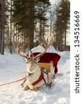 Reindeer  Harnessed To A Sled