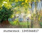 Watering Garden Morning - Fine Art prints