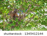 newly hatched baby robins stick ... | Shutterstock . vector #1345412144