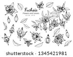 collection set of fuchsia... | Shutterstock .eps vector #1345421981