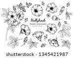Collection Set Of Hollyhock...