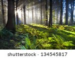 union wood sunrise 3 | Shutterstock . vector #134545817