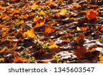 old foliage of deciduous trees... | Shutterstock . vector #1345603547