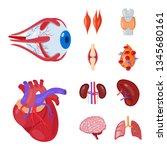 vector design of anatomy and... | Shutterstock .eps vector #1345680161