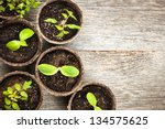 potted seedlings growing in... | Shutterstock . vector #134575625