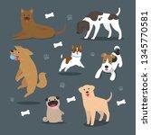 vector cartoon dog breeds... | Shutterstock .eps vector #1345770581