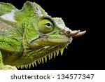 four horned chameleon  ...   Shutterstock . vector #134577347