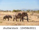 African Elephant Elephant...