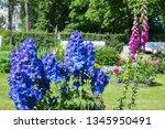 blooming delphinium in the park  | Shutterstock . vector #1345950491