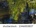 weeping willow tree and a pond... | Shutterstock . vector #1346003837