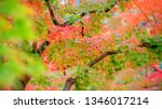 autumn colorful red maple leaf... | Shutterstock . vector #1346017214