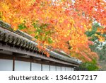 autumn colorful red maple leaf... | Shutterstock . vector #1346017217