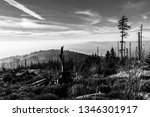 devasted forest in caues of... | Shutterstock . vector #1346301917