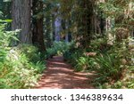 hiking trail in beautiful... | Shutterstock . vector #1346389634
