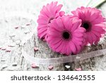 pink gerber on wooden background - stock photo