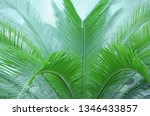 beautiful background with...   Shutterstock . vector #1346433857