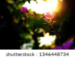 flowers and natural light from... | Shutterstock . vector #1346448734