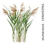 Cattail And Reed Plant...