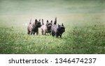 lots of little funny dogs walk... | Shutterstock . vector #1346474237
