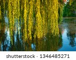close up of weeping willow tree ... | Shutterstock . vector #1346485271