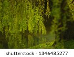 close up of weeping willow tree ... | Shutterstock . vector #1346485277