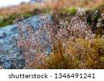 green mosses  light grass ... | Shutterstock . vector #1346491241