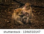 monkey family with baby | Shutterstock . vector #1346510147
