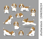 Stock vector vector illustration set of beagle dog in different poses cute puppy in modern flat style animal 1346536214