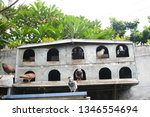 pigeons and their extended... | Shutterstock . vector #1346554694