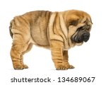 side view of shar pei puppy  11 ... | Shutterstock . vector #134689067