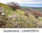 the stony  turning green... | Shutterstock . vector #1346955074
