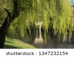 bright green weeping willow on... | Shutterstock . vector #1347232154