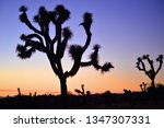 Joshua Trees Silhouette In The...