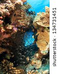 marine life in the red sea | Shutterstock . vector #134731451