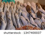 baby sharks in the fish market... | Shutterstock . vector #1347400037