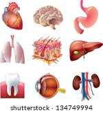 human body parts detailed... | Shutterstock .eps vector #134749994