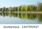 swans on the calm lake in spring | Shutterstock . vector #1347593537