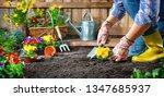 gardener planting flowers in... | Shutterstock . vector #1347685937