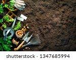 Gardening Tools And Seedlings...
