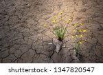 yellow flower on dried cracked... | Shutterstock . vector #1347820547