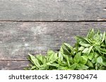 green basil leafs on grey... | Shutterstock . vector #1347980474