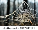Frozen Spider Web. Frozen...
