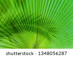 the shade of a palm tree branch ... | Shutterstock . vector #1348056287