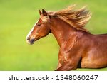 red horse with long blond mane... | Shutterstock . vector #1348060247